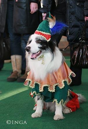 Конкурс костюмов на выставке собак